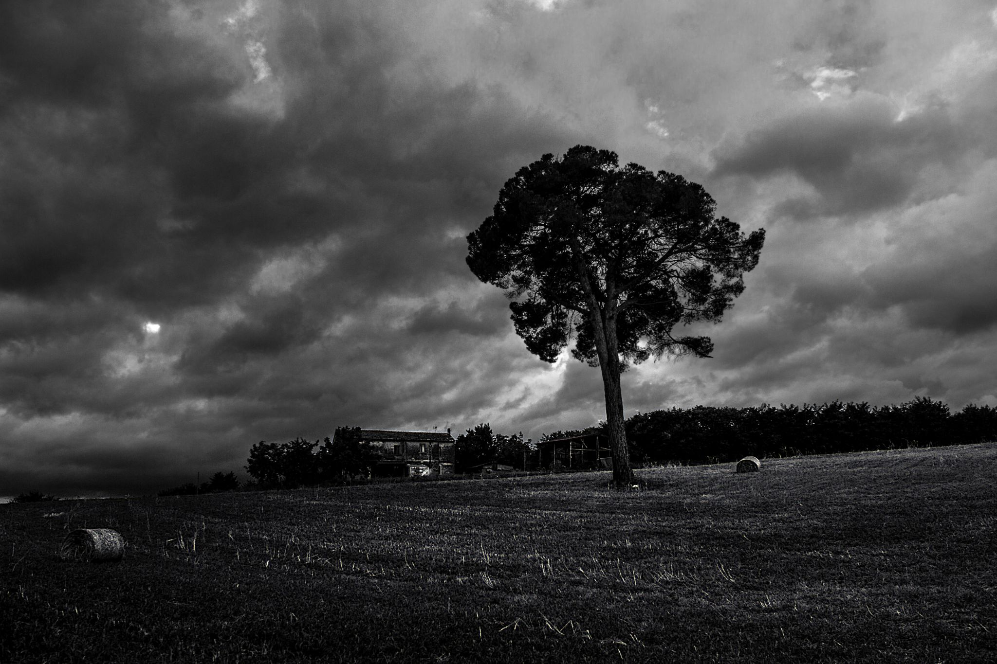 the rain over the tree by LorenzoRocco