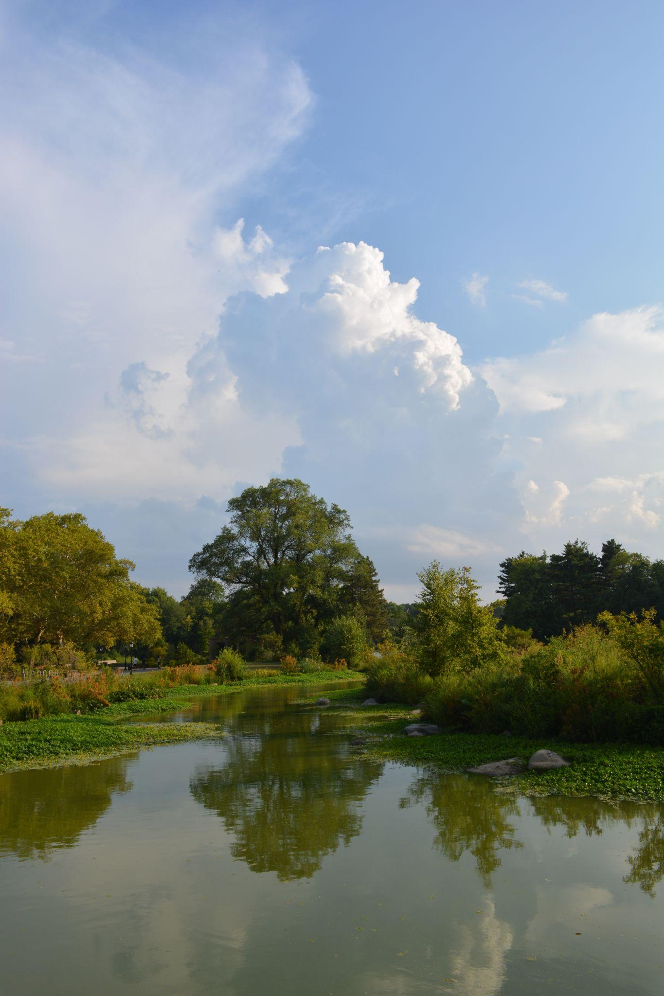 One wonderful afternoon in Prospect Park by Stefan Troberg