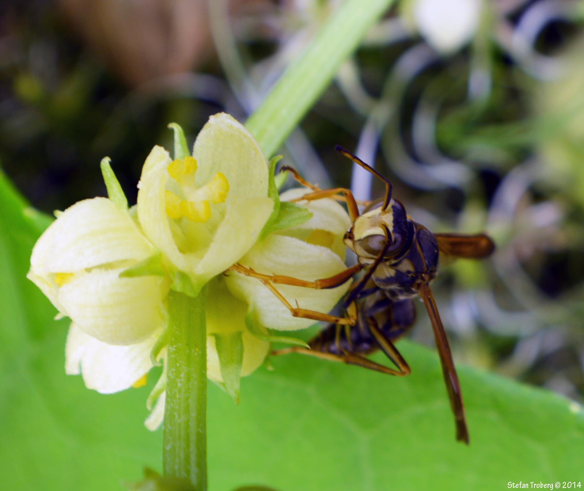 Life on a flower by Stefan Troberg