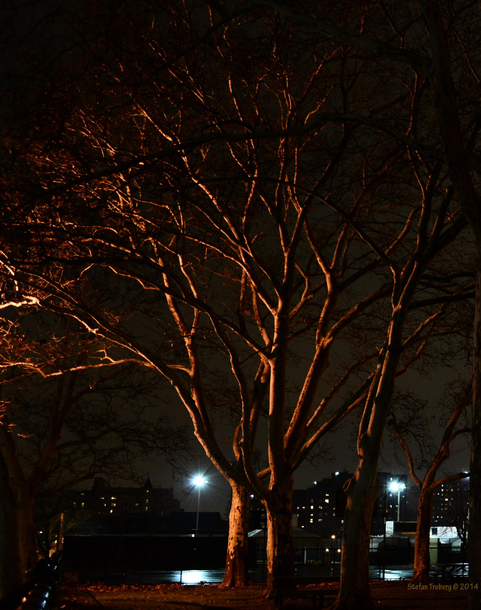 The tree glowing in the darkness away from street lights by Stefan Troberg