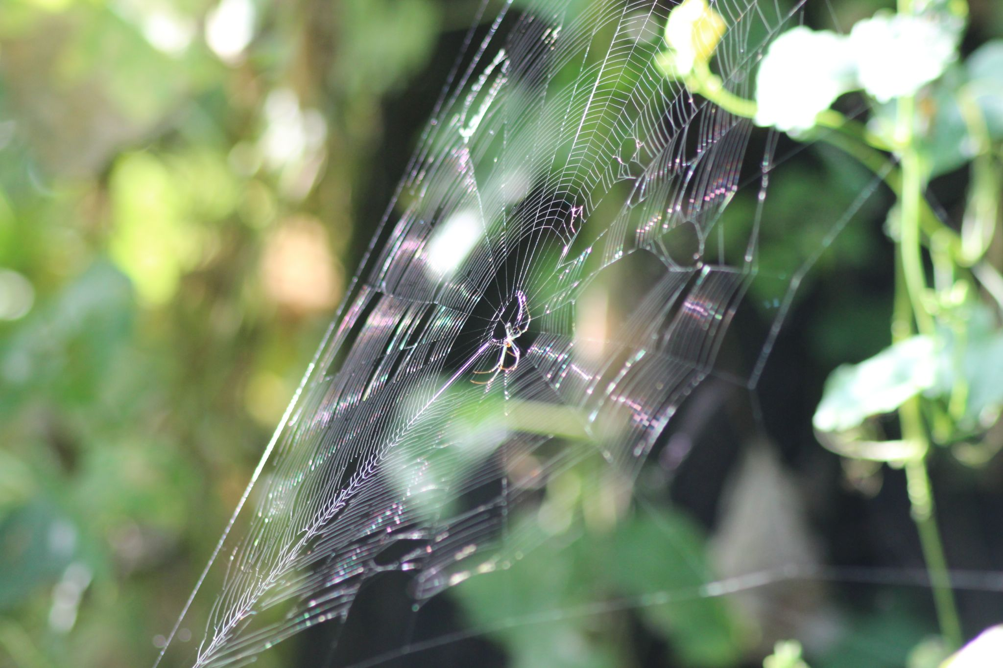 spider web by Hemang Shukla