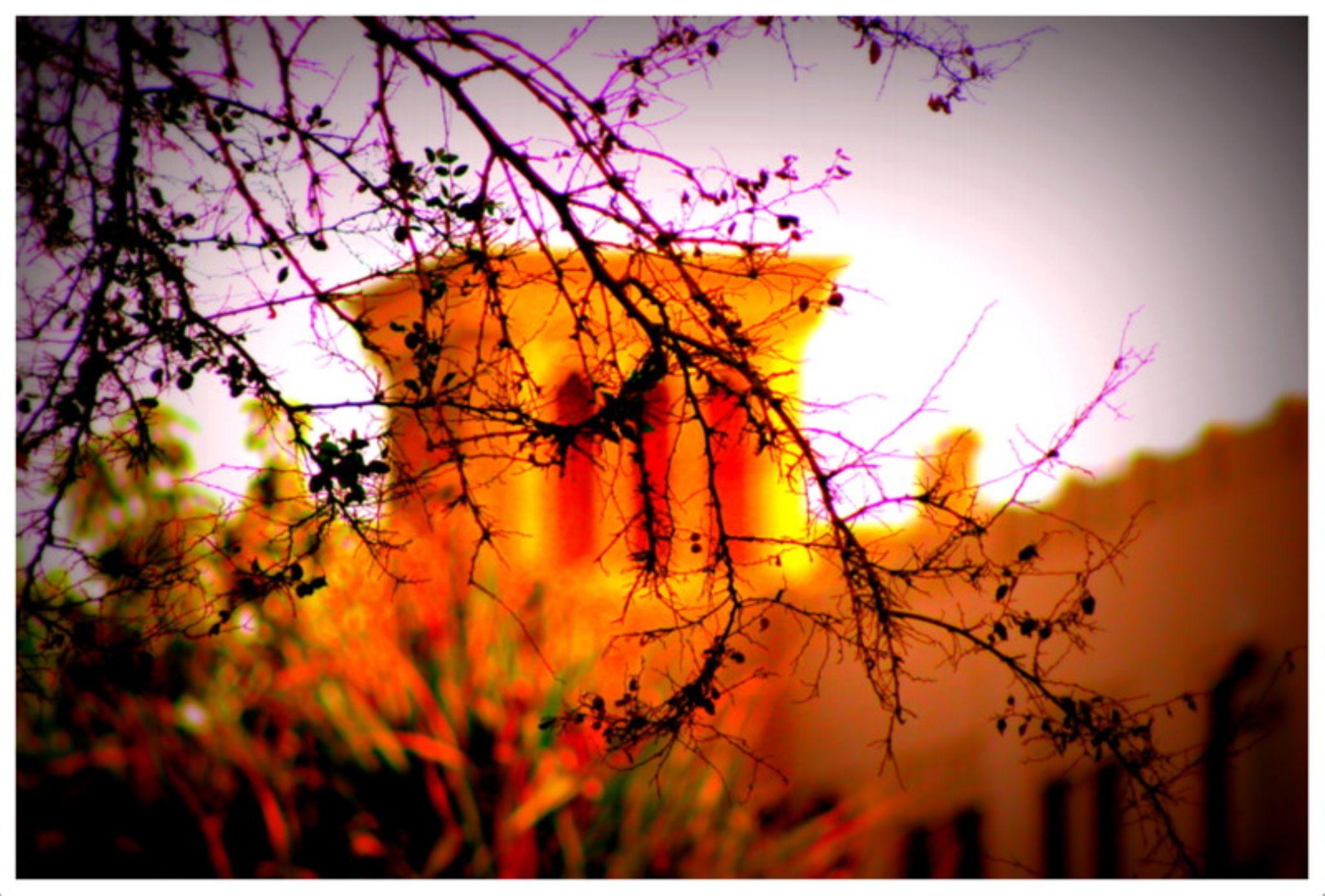 The Veil...   by saumyasrivastava1