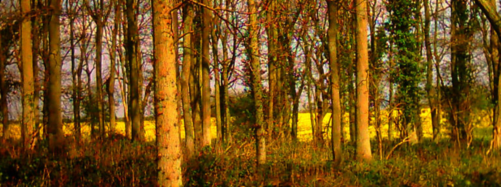 lincolnshire wood england by chris.adams.3557