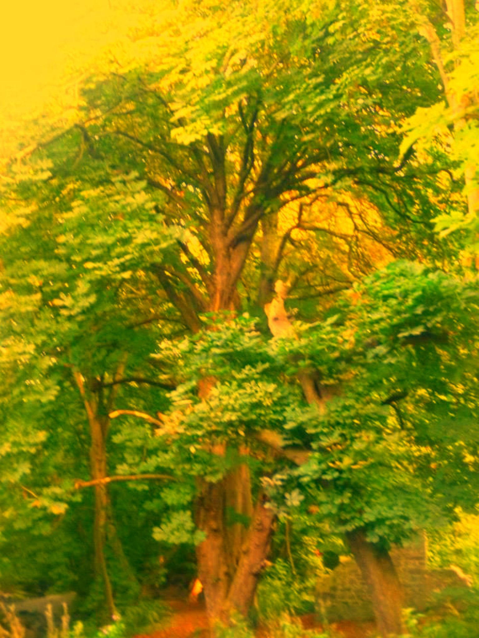 tree by chris.adams.3557