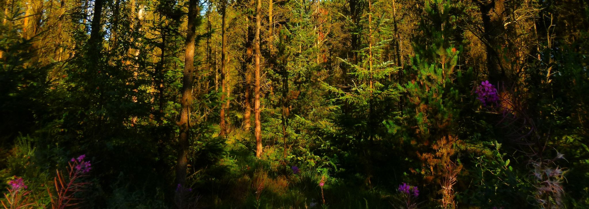 bethnina forest wales by chris.adams.3557