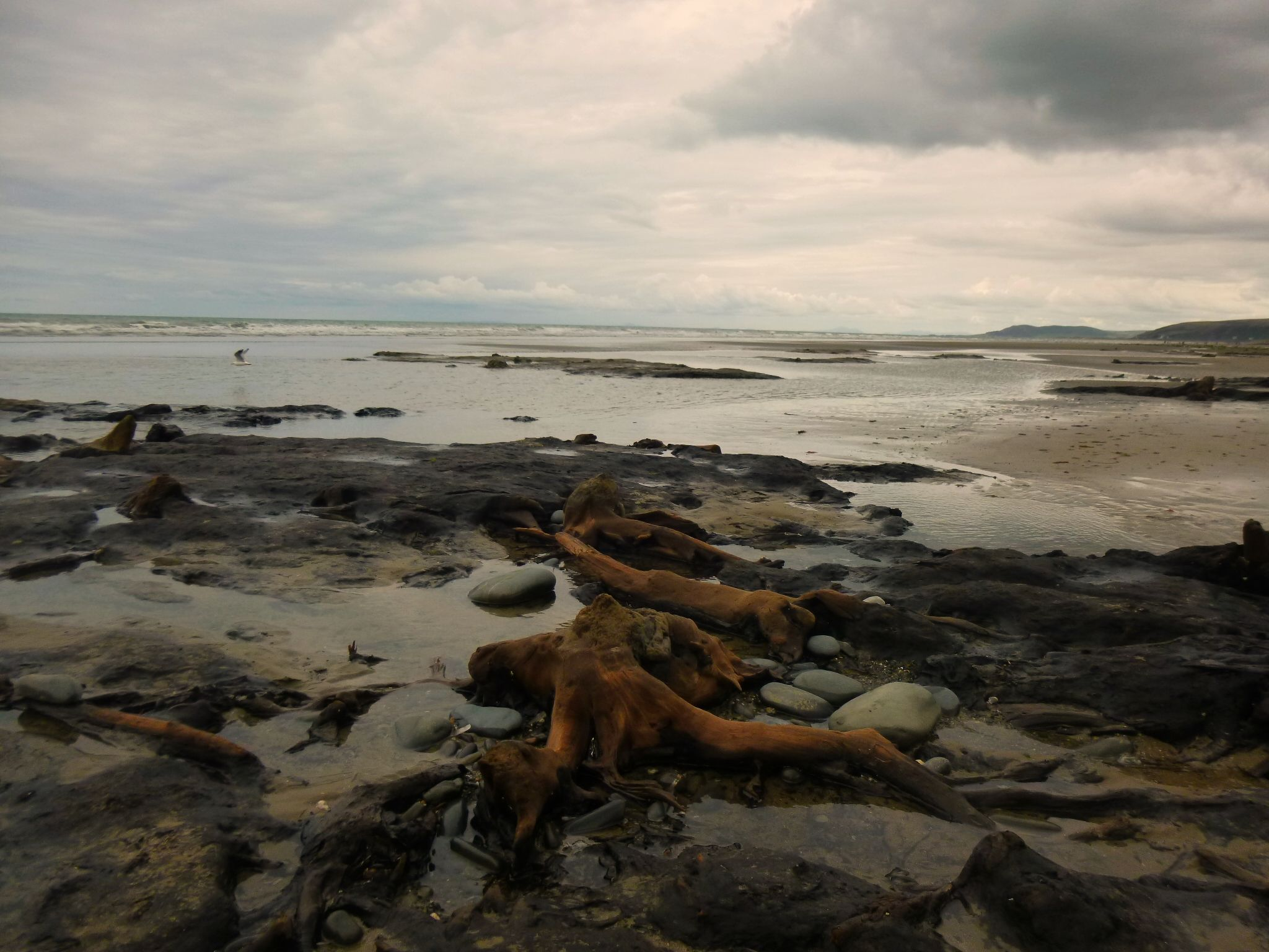 petrified forest borth wales by chris.adams.3557