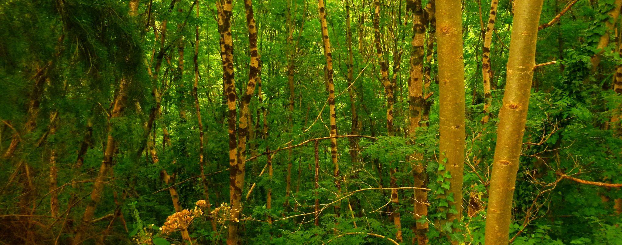 woodland ceredigion wales by chris.adams.3557