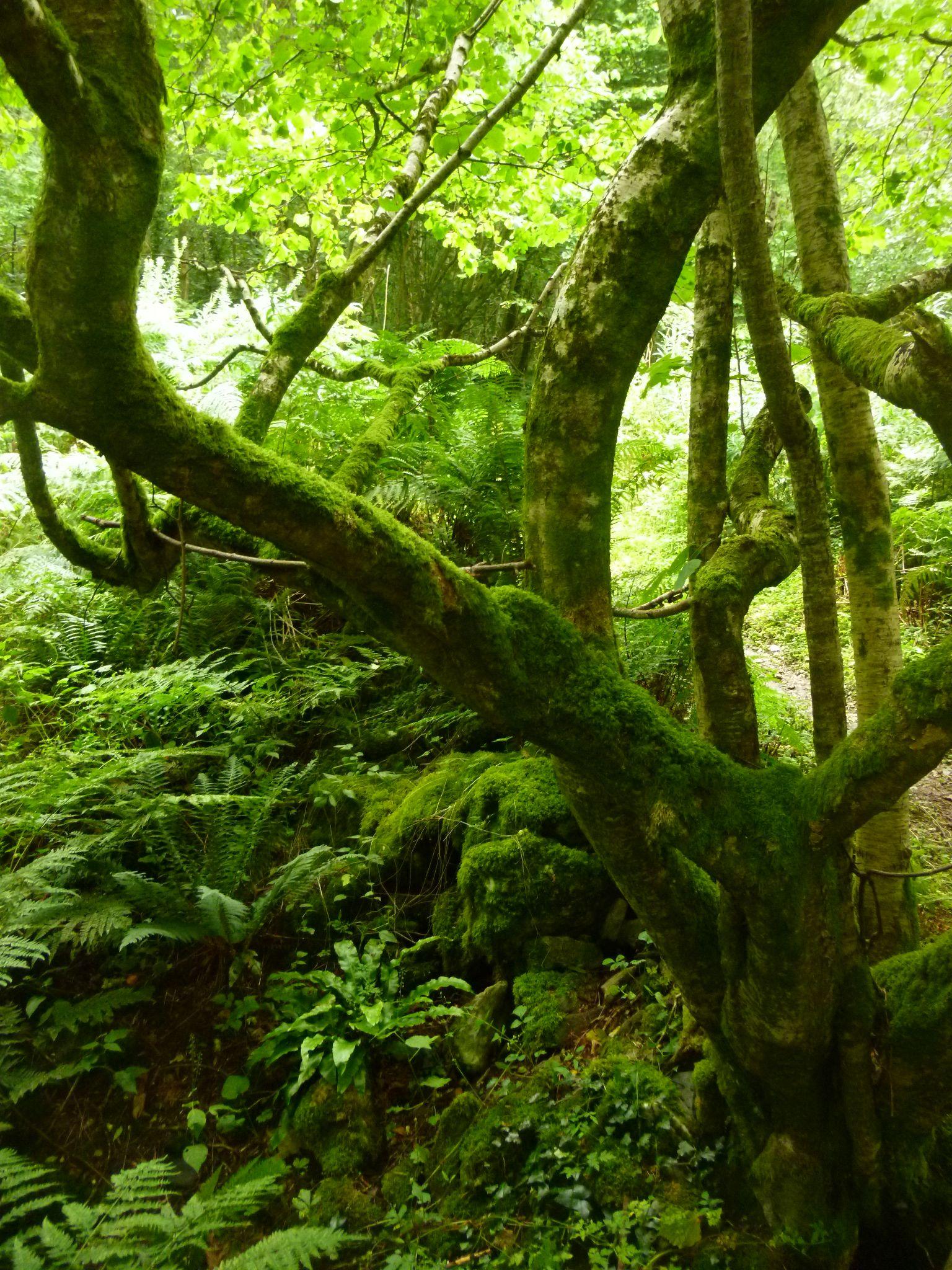 woodland near cwmtydu wales by chris.adams.3557