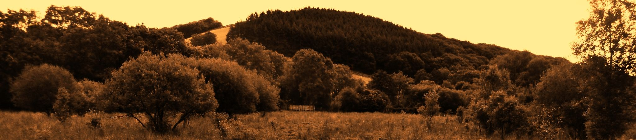 tregaron bog wales by chris.adams.3557