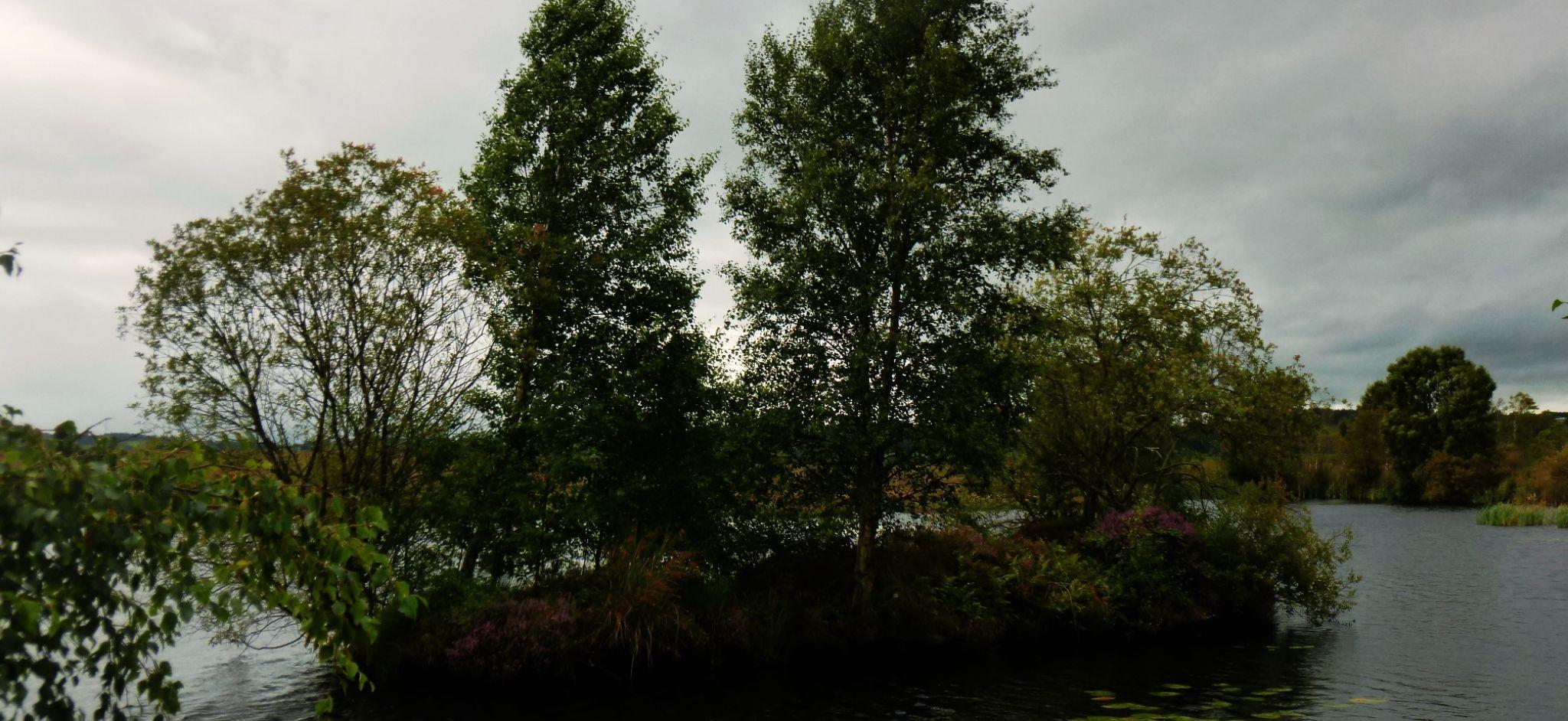 tregaron bog wales by chris.adams.3557