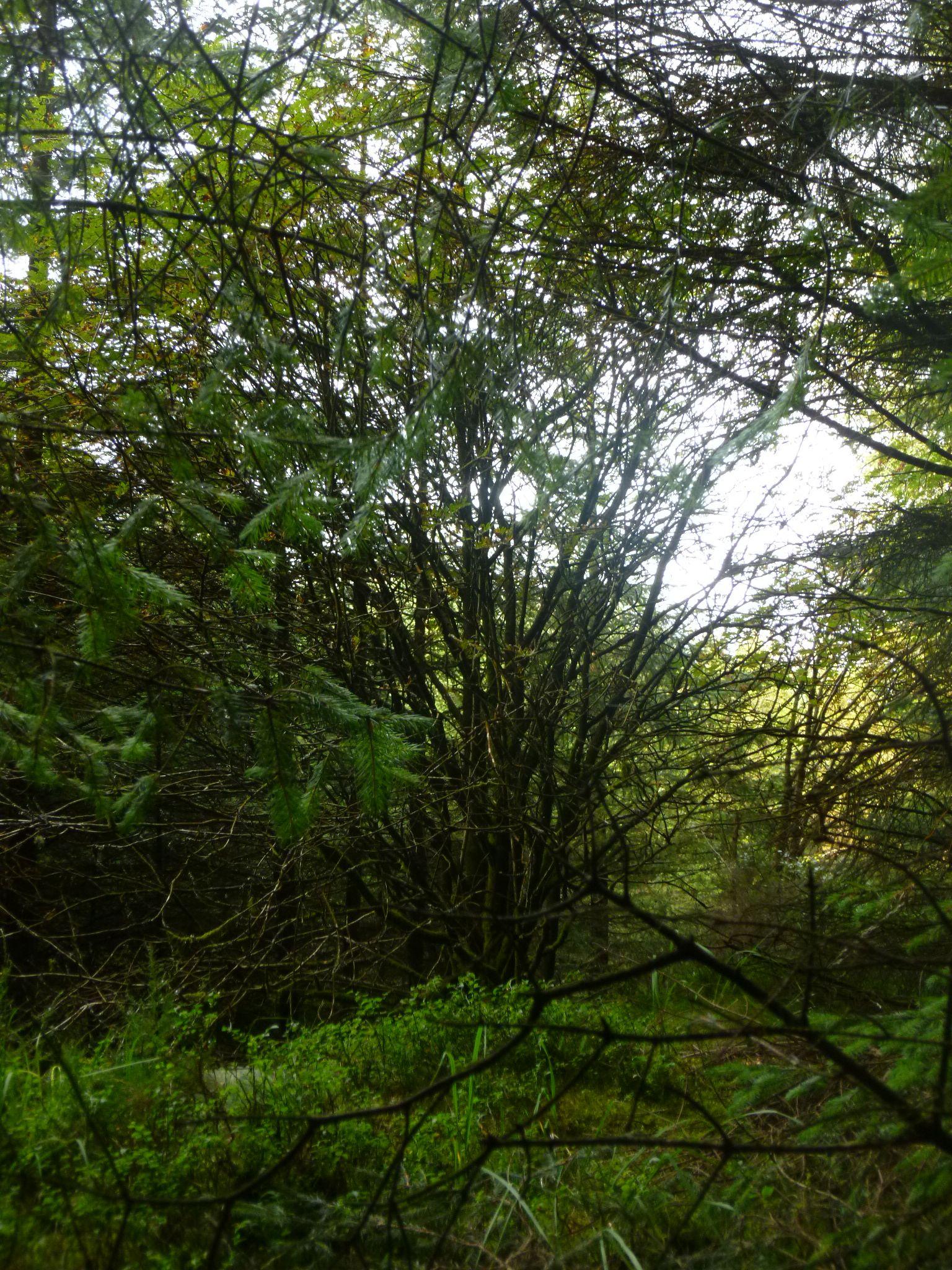 woodland wales by chris.adams.3557