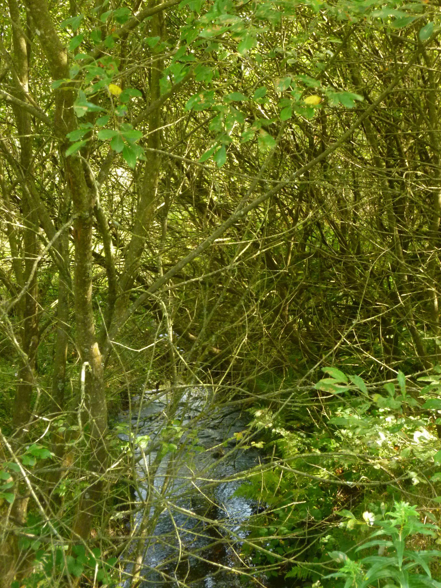 forest stream by chris.adams.3557
