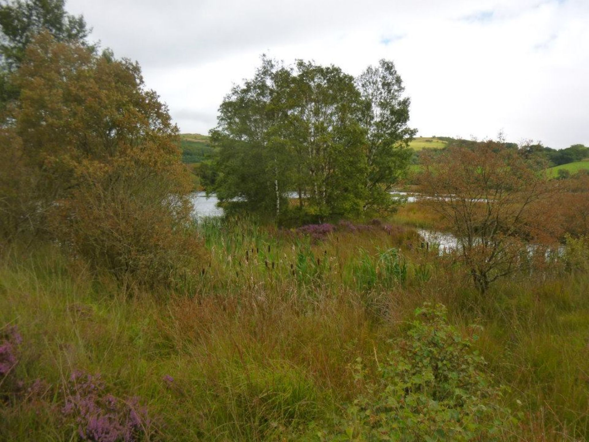 cors caron  (tregaron bog) by chris.adams.3557