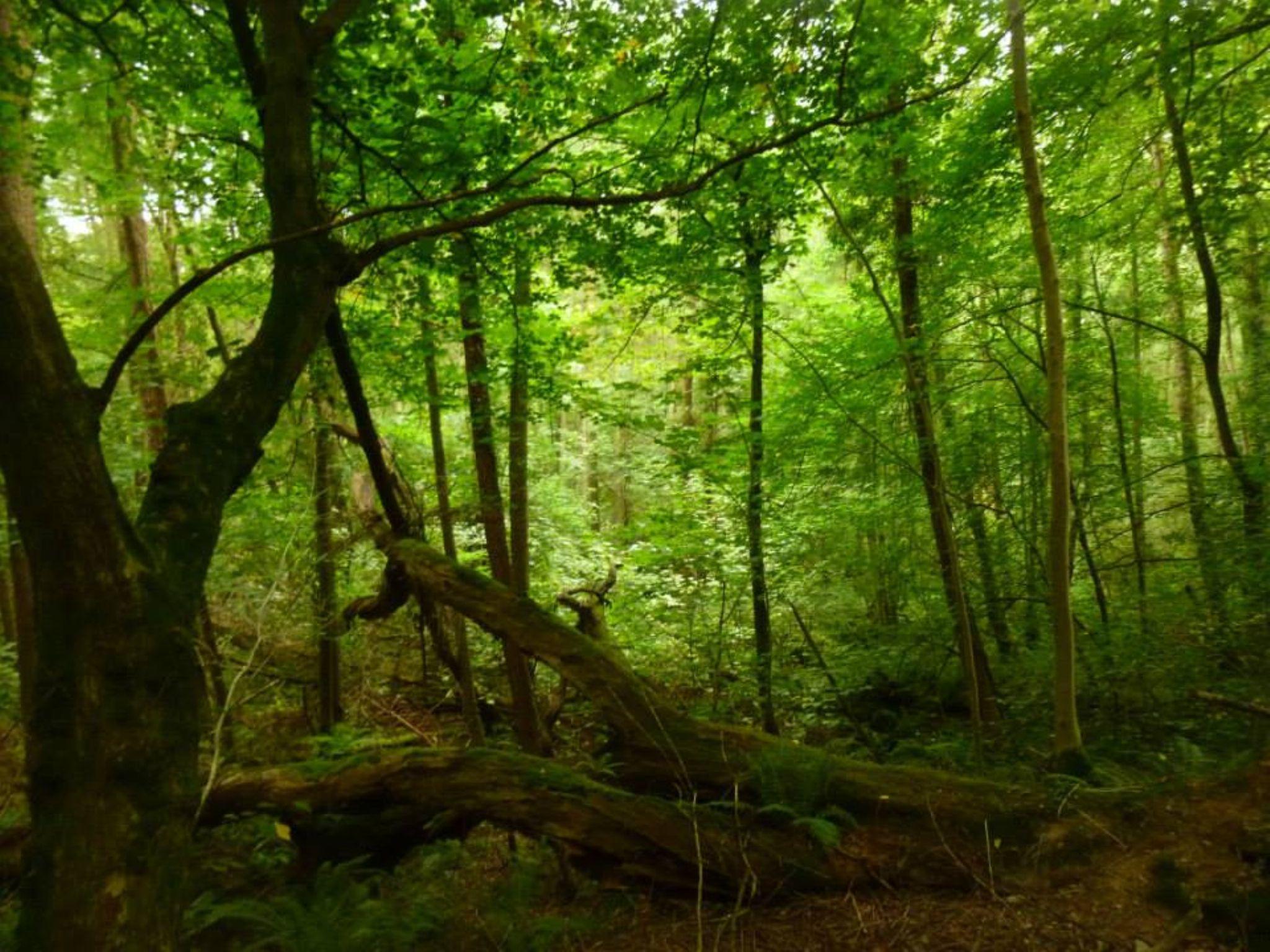 llanerchaeron woods by chris.adams.3557