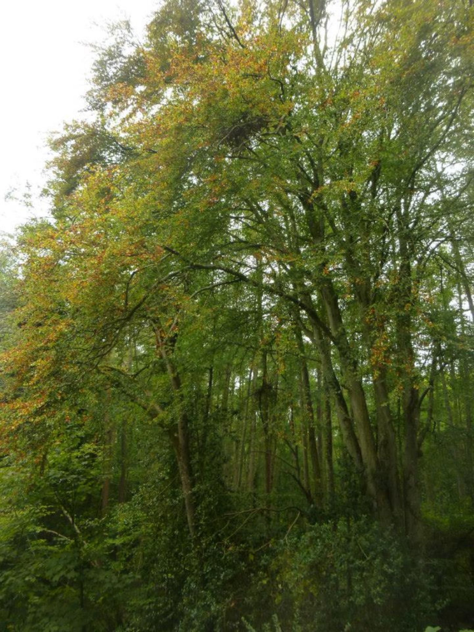 autumn by chris.adams.3557