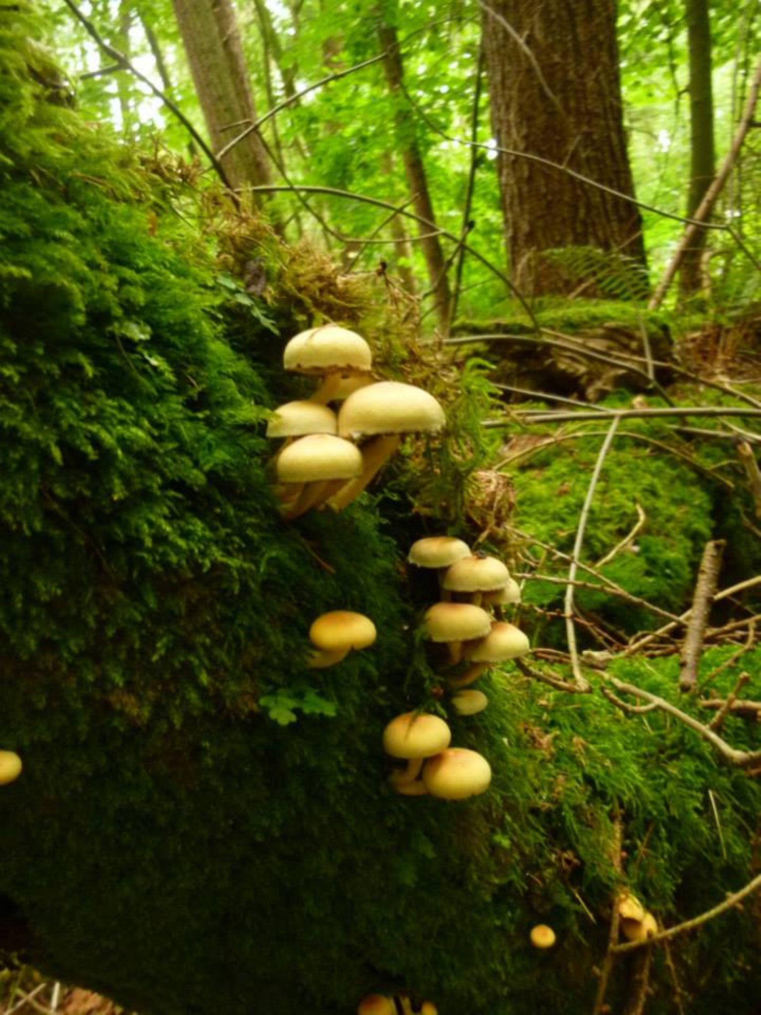 fungi by chris.adams.3557