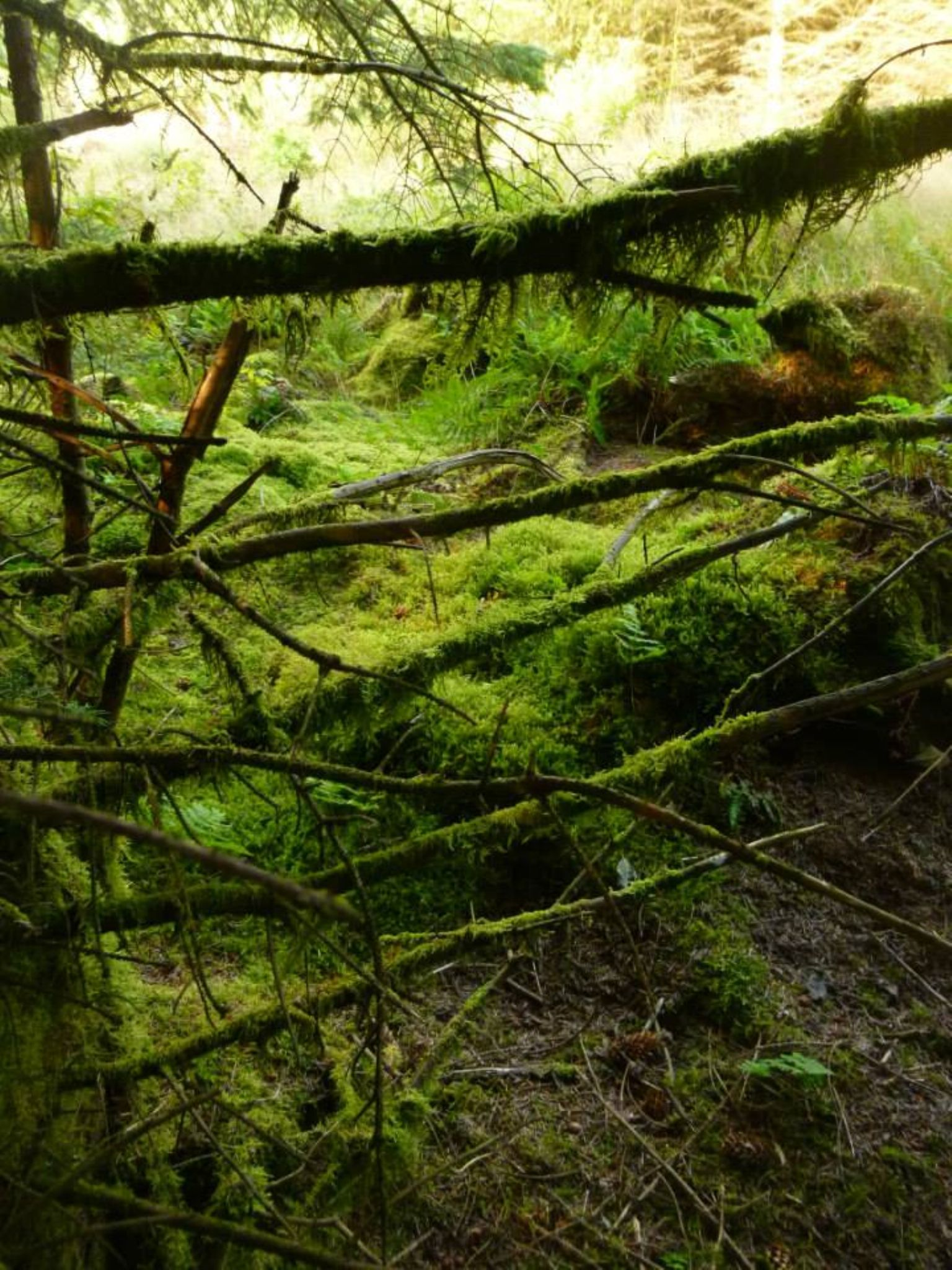lichen and moss by chris.adams.3557