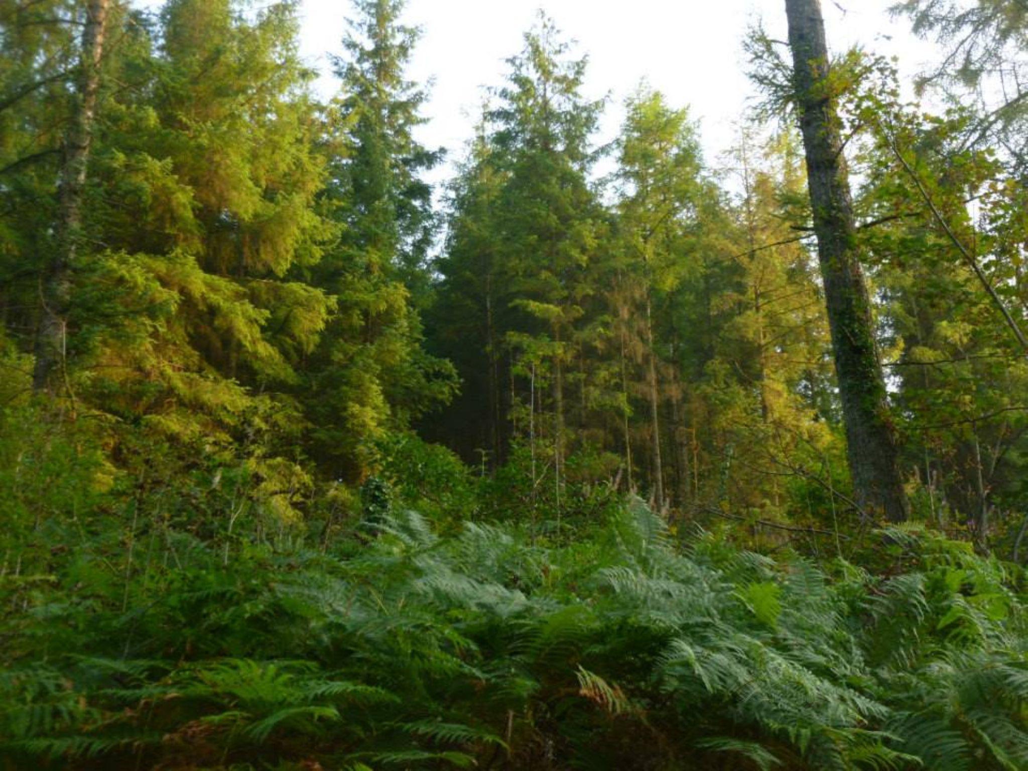brechfa forest by chris.adams.3557