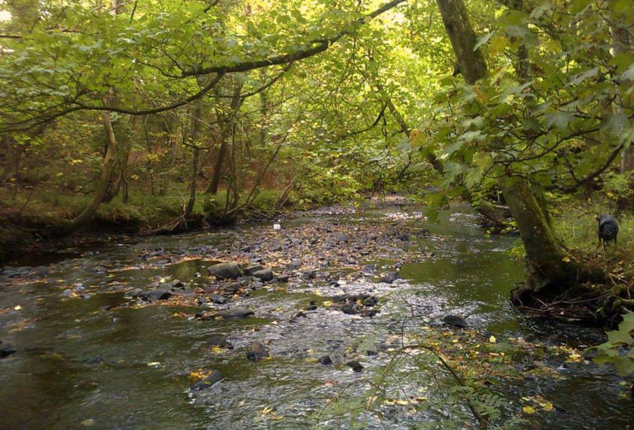 river aeron by chris.adams.3557