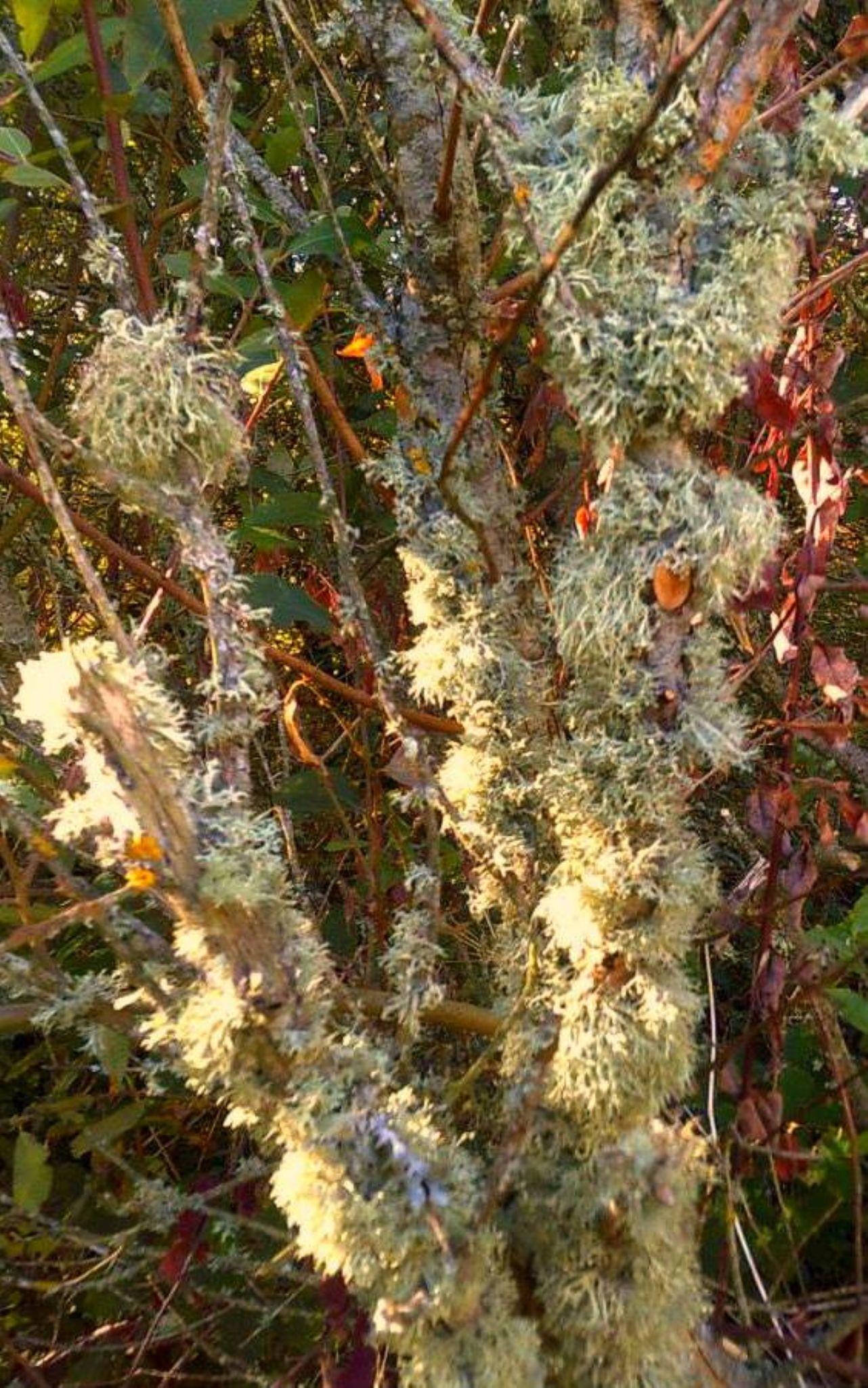 lichen by chris.adams.3557