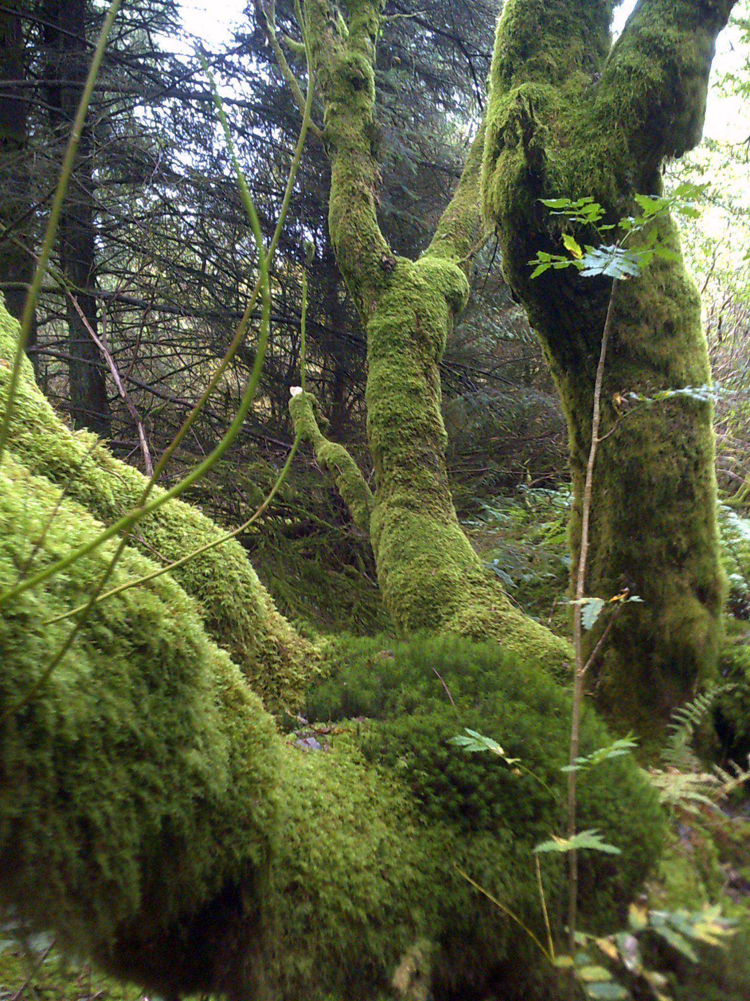 cross inn forest by chris.adams.3557