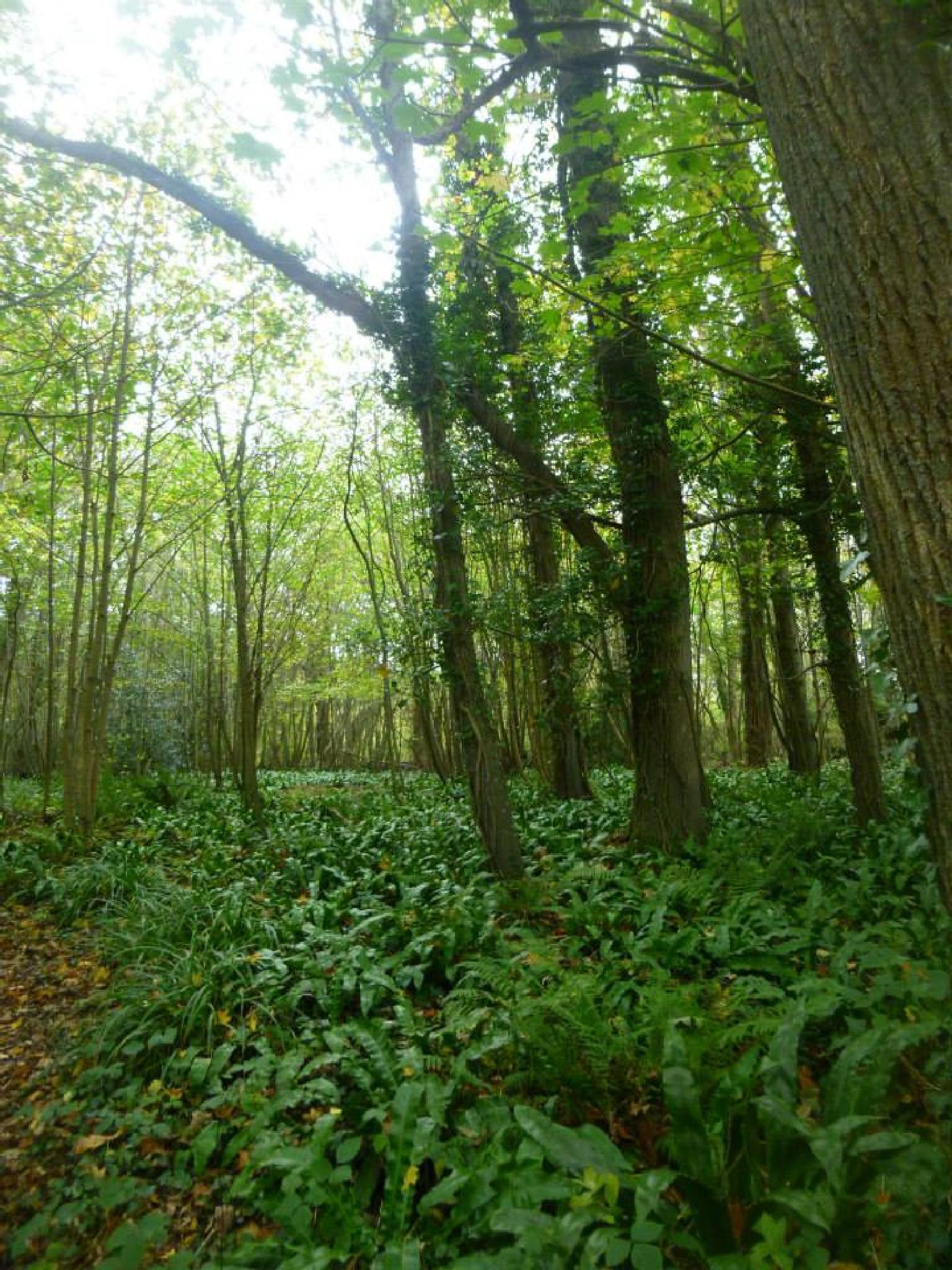llaninia woods by chris.adams.3557