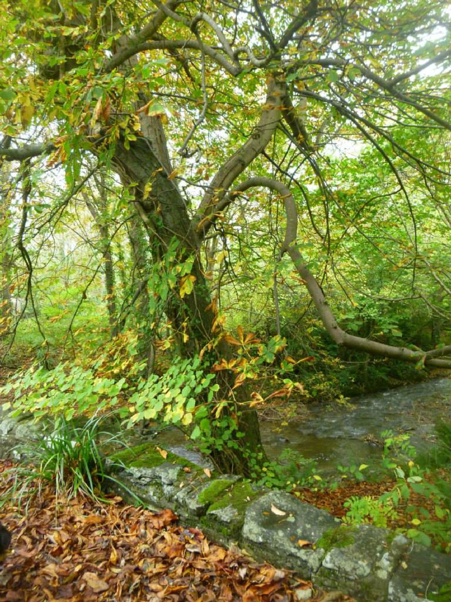 Photo in Nature #tree #woods #wales #ceredigion