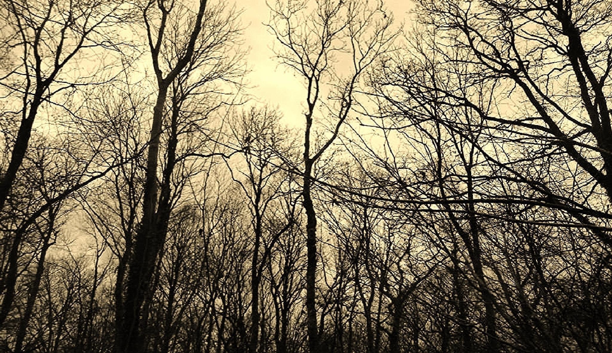 cenarth woods by chris.adams.3557