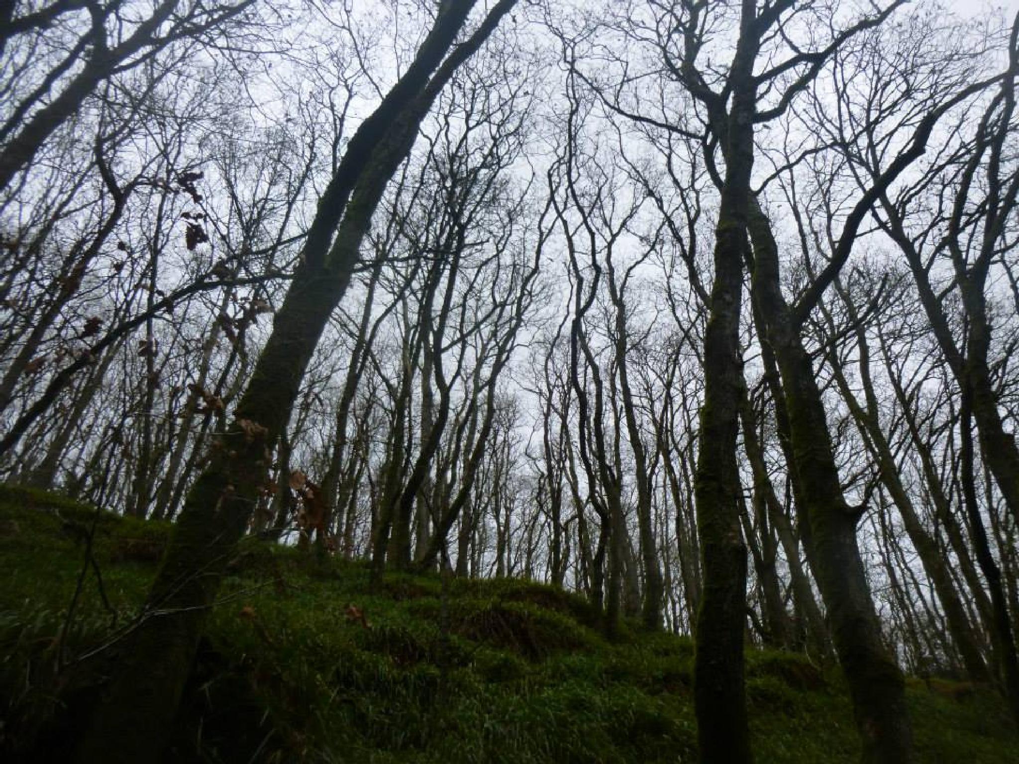 woods at cenarth by chris.adams.3557