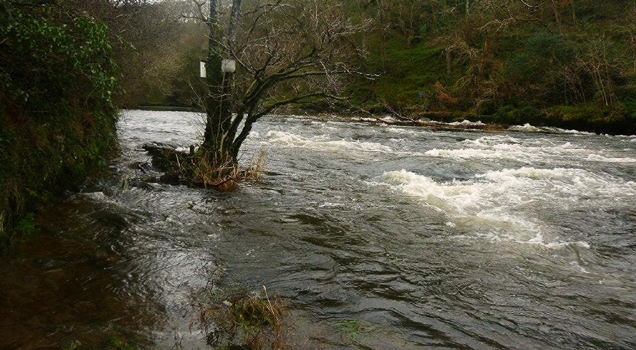 river teifi by chris.adams.3557
