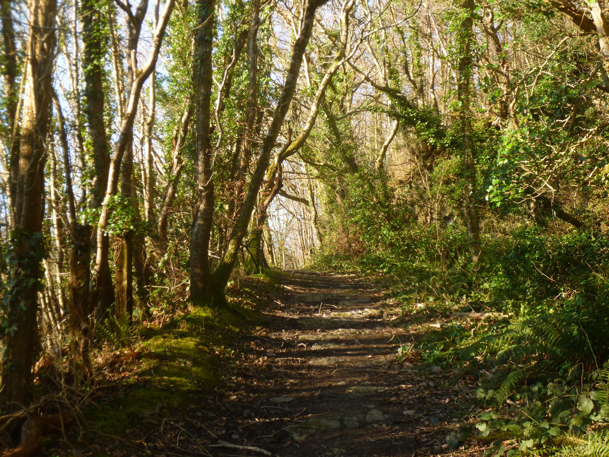 path in the woods by chris.adams.3557
