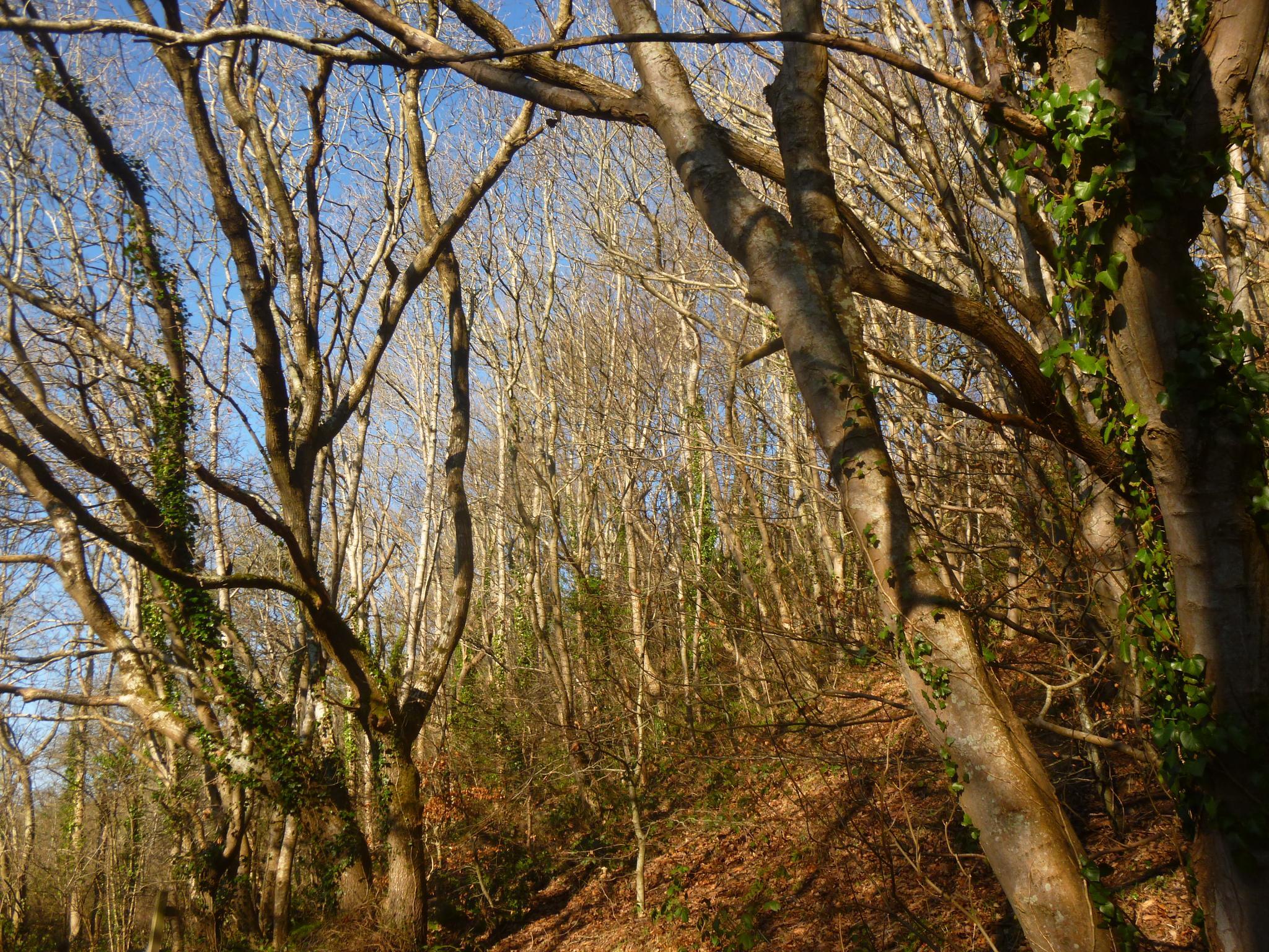 aberaeron woods by chris.adams.3557