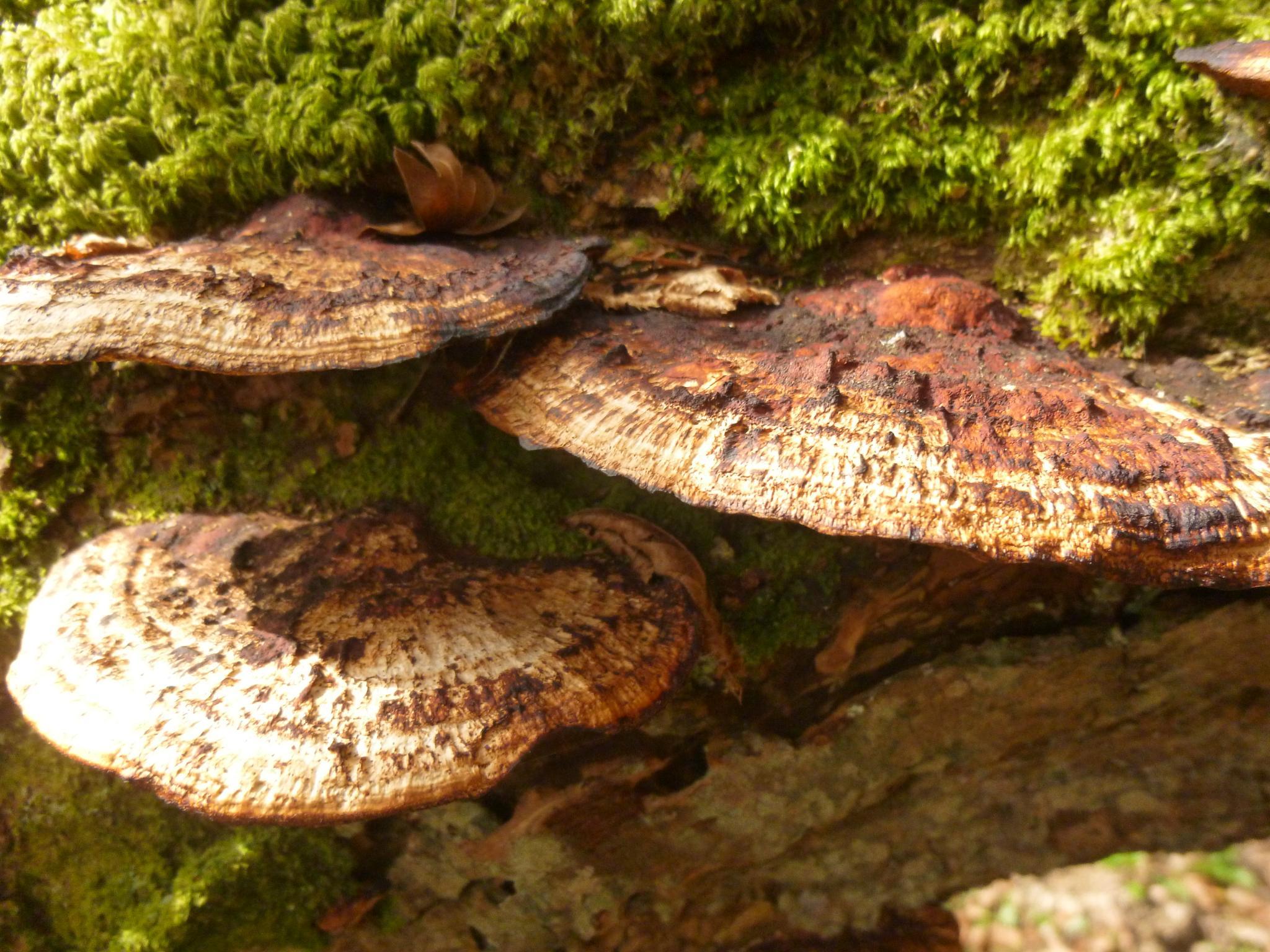Photo in Nature #wales #ceredigion #fungi
