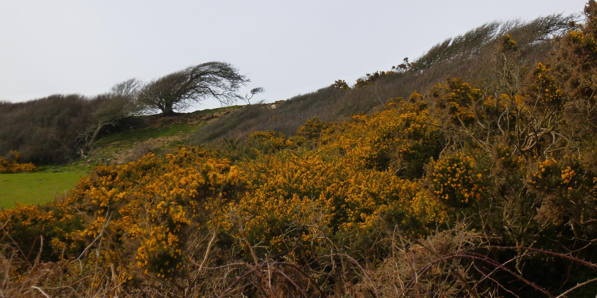 Photo in Landscape #wales #pembrokeshire #nature