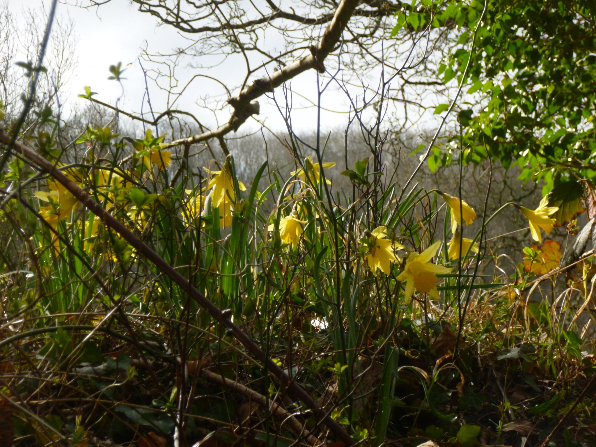 woodland flowers by chris.adams.3557