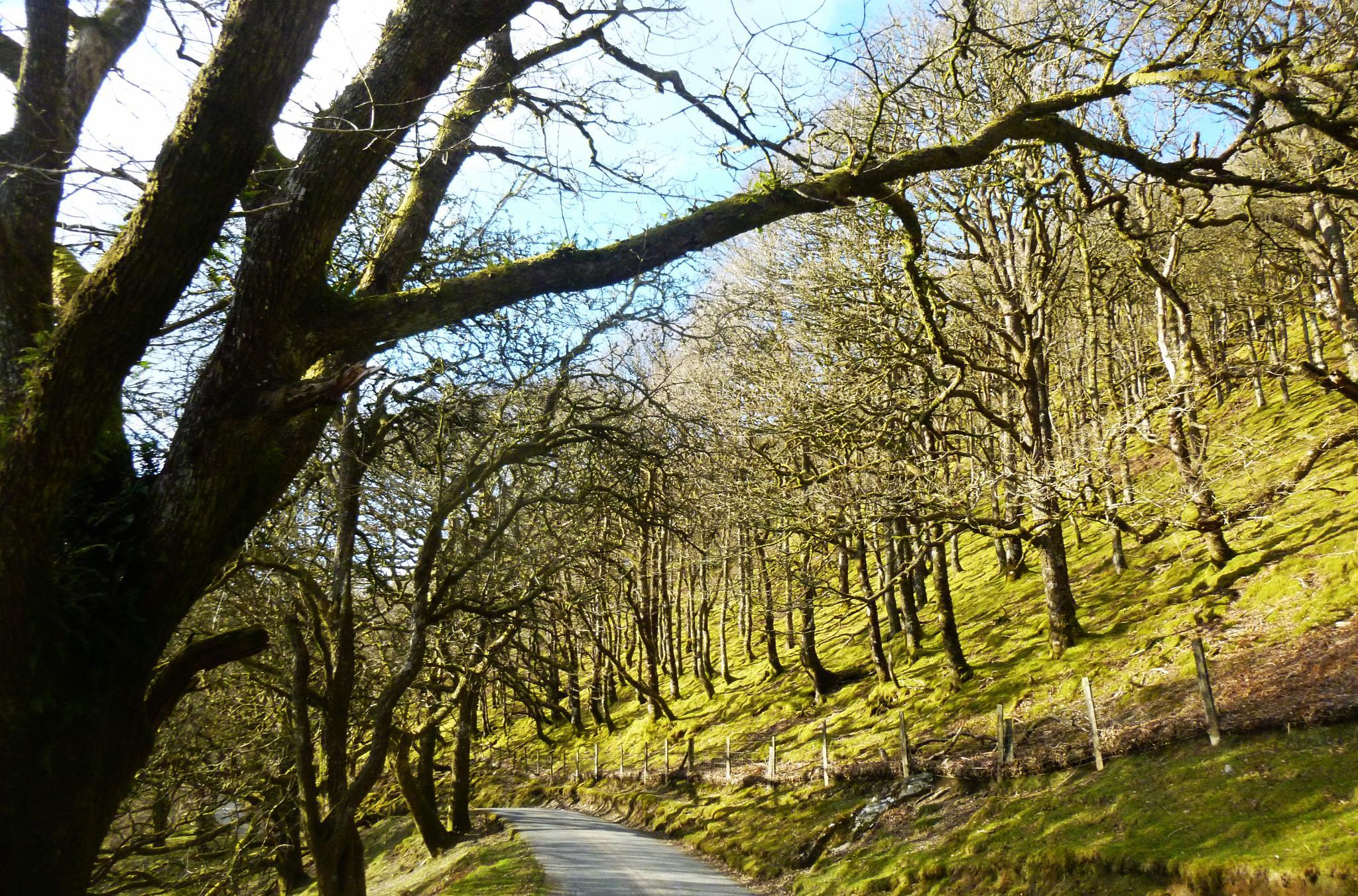 mountain woodland by chris.adams.3557