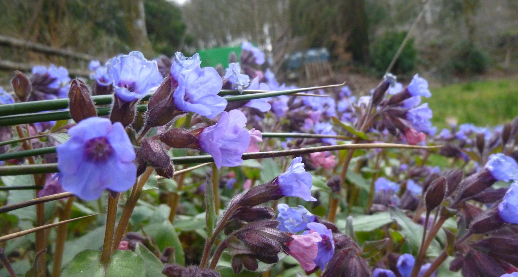 spring flowers by chris.adams.3557