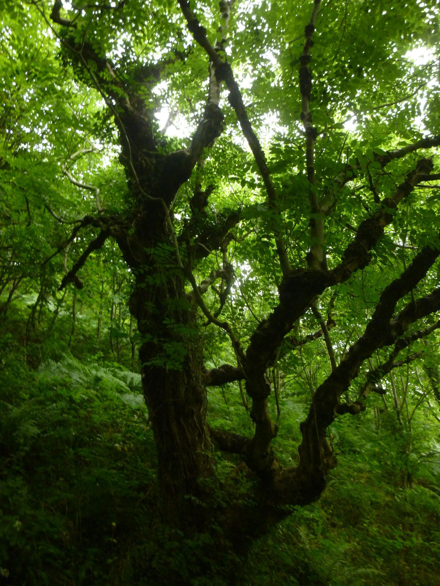 old tree by chris.adams.3557