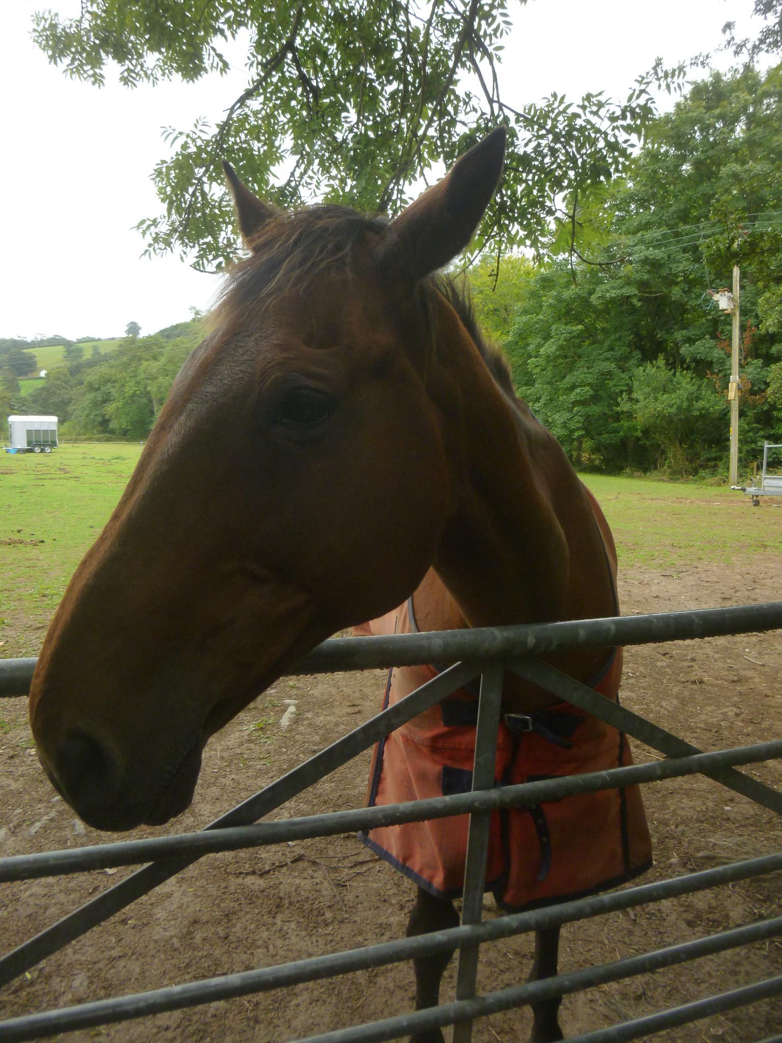 horse by chris.adams.3557