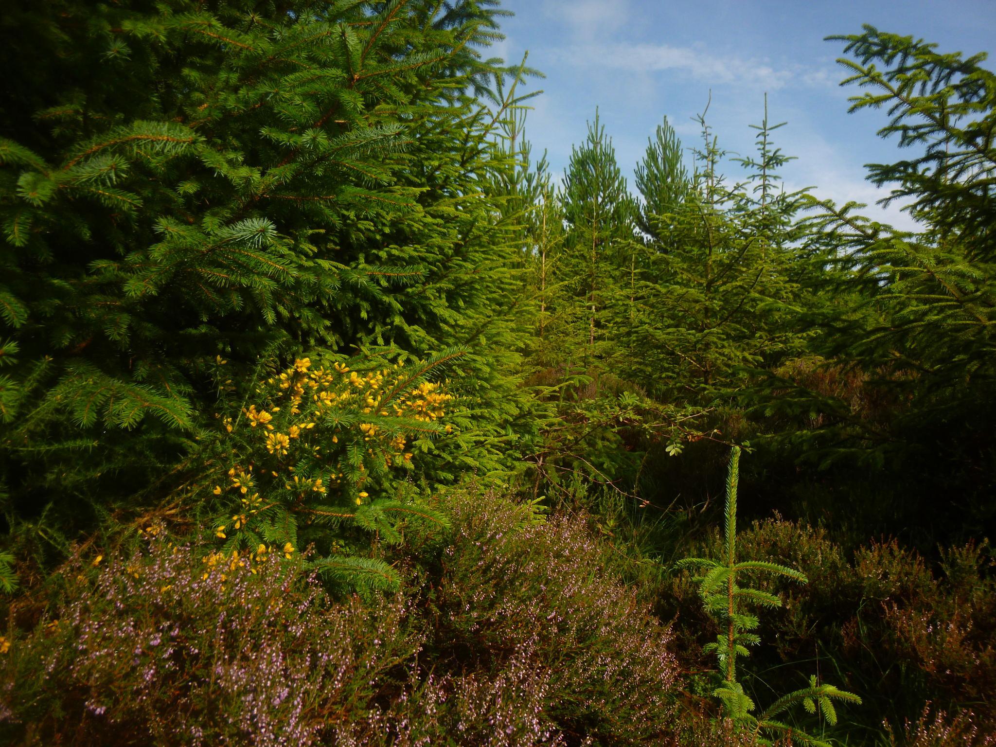 woodland near plwmp by chris.adams.3557