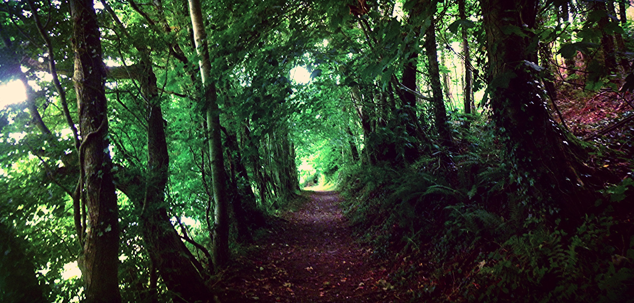 tunnel of tree by chris.adams.3557