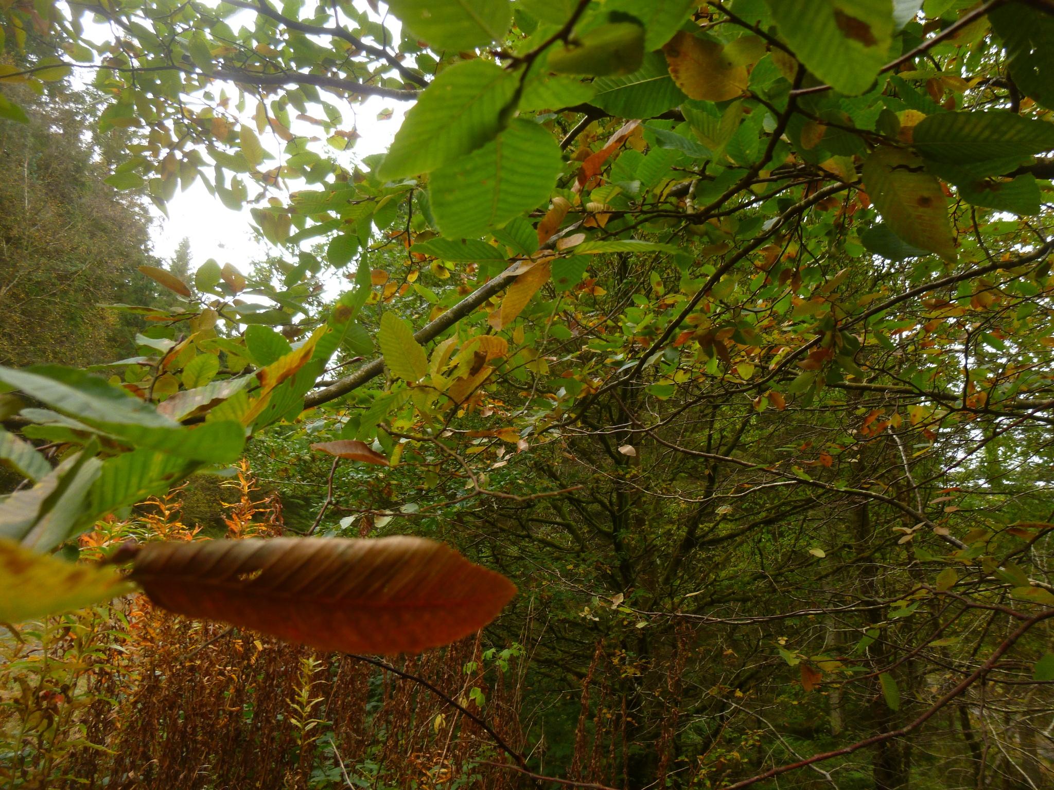 autumn woods by chris.adams.3557