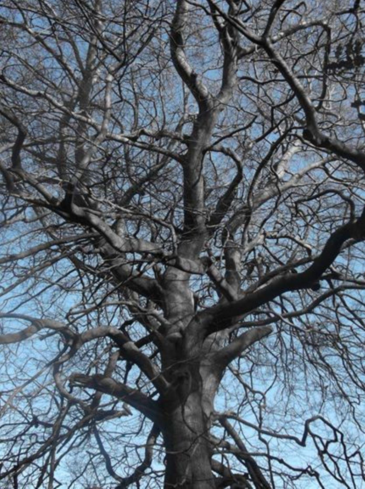 tree of life by shazoot1984