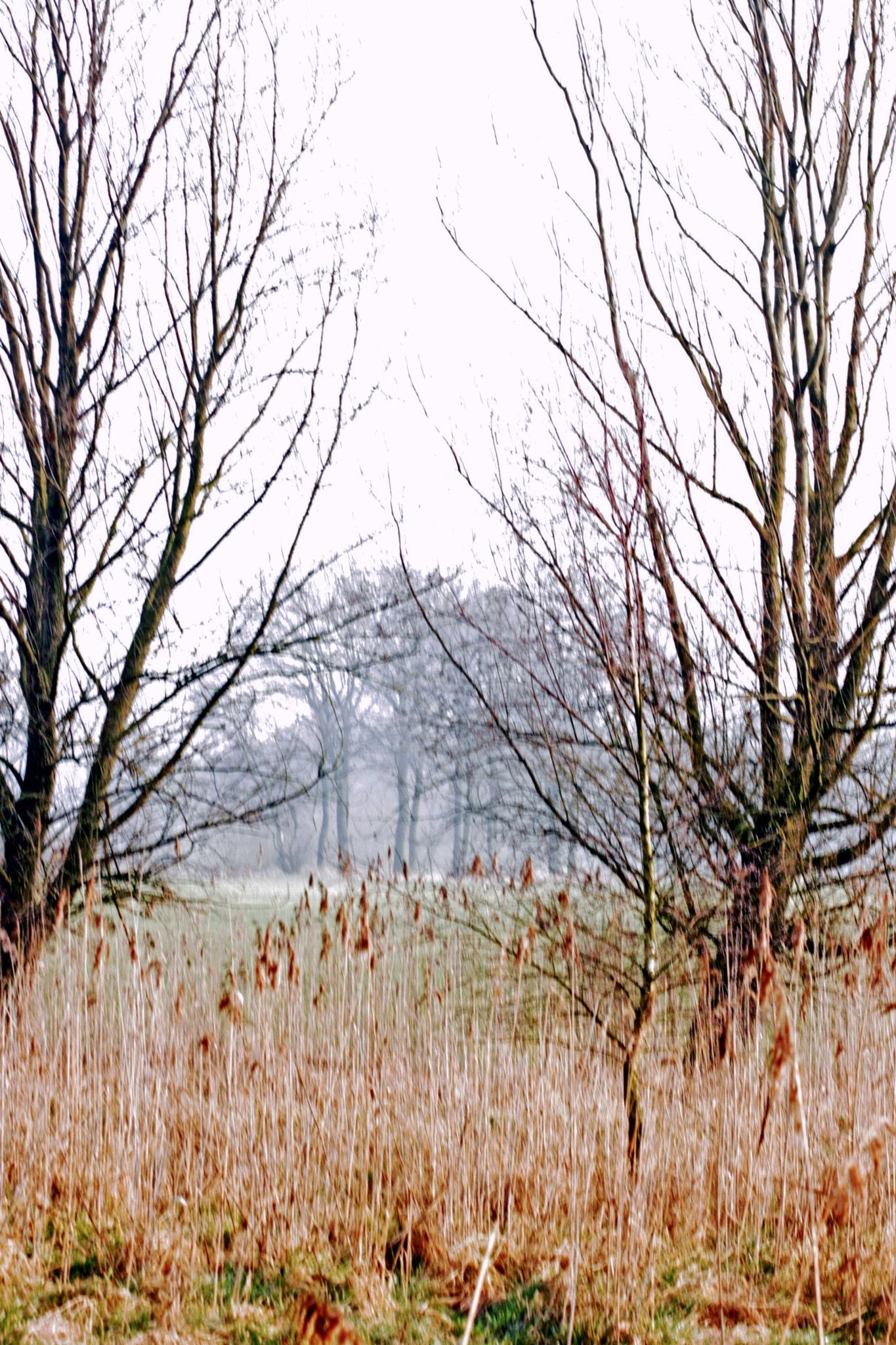 Heathland in the morning. by frankverhoeven1