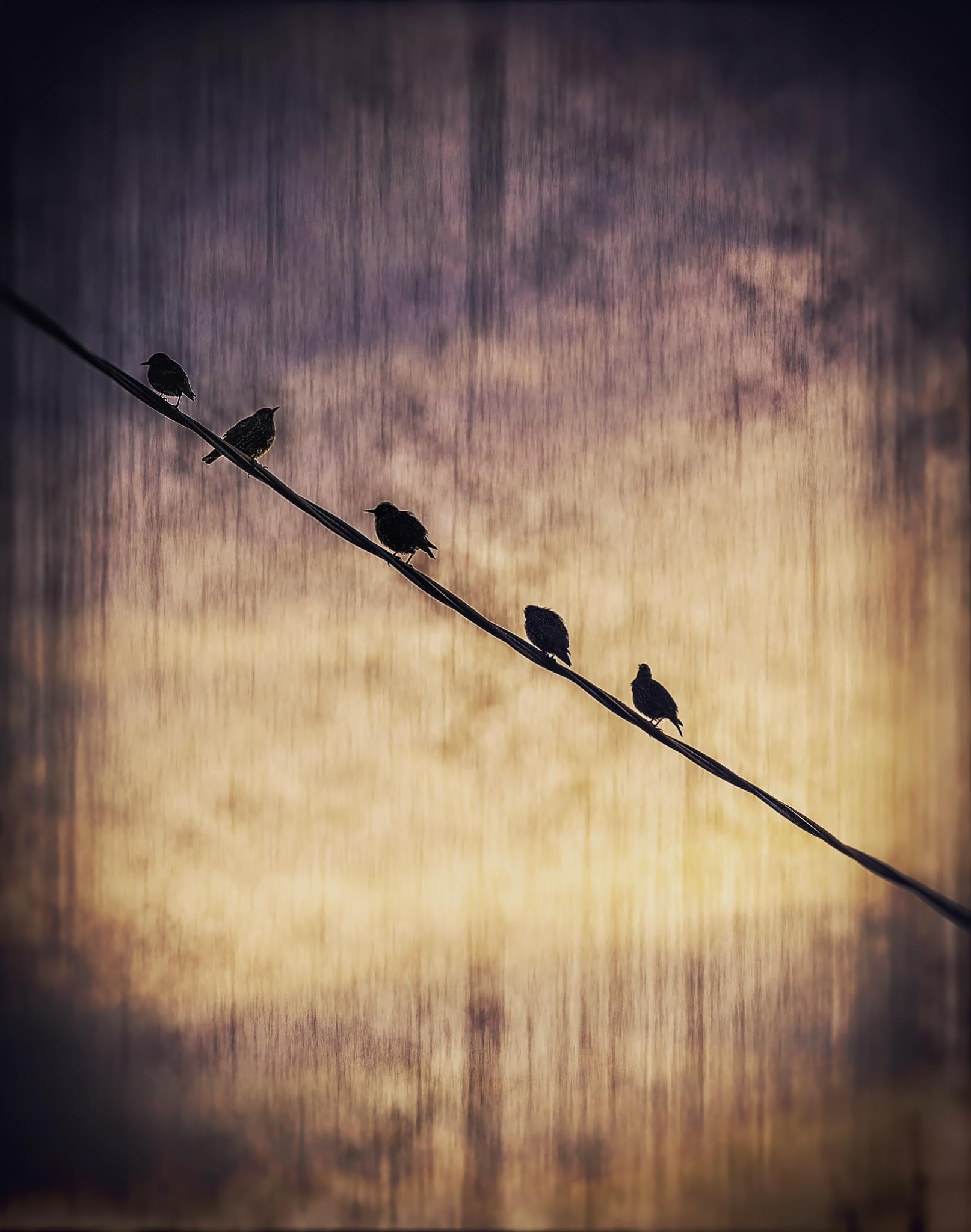 Birds on a Wire by dbreckles