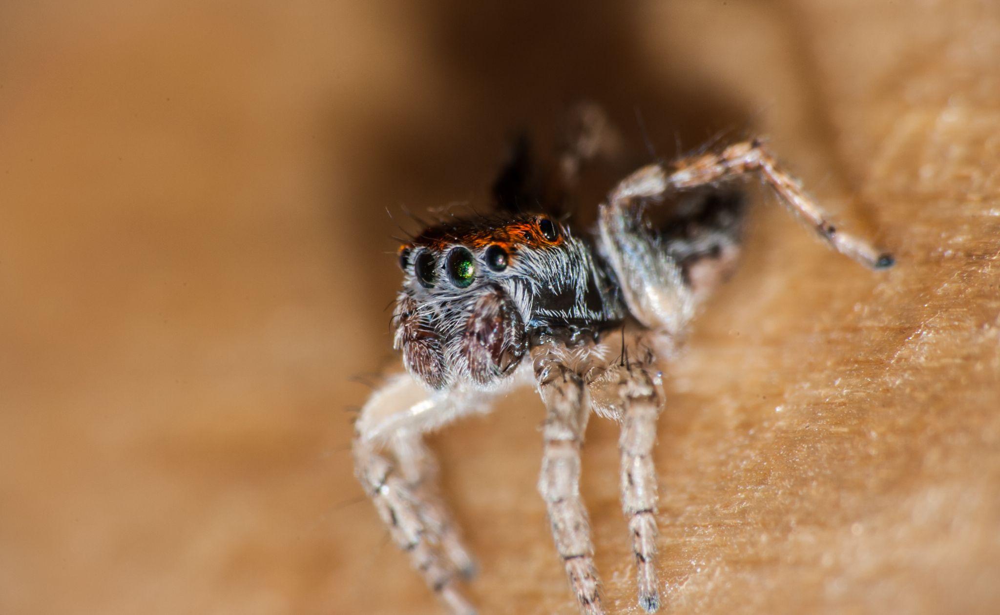 Spider. by Fabien Violi