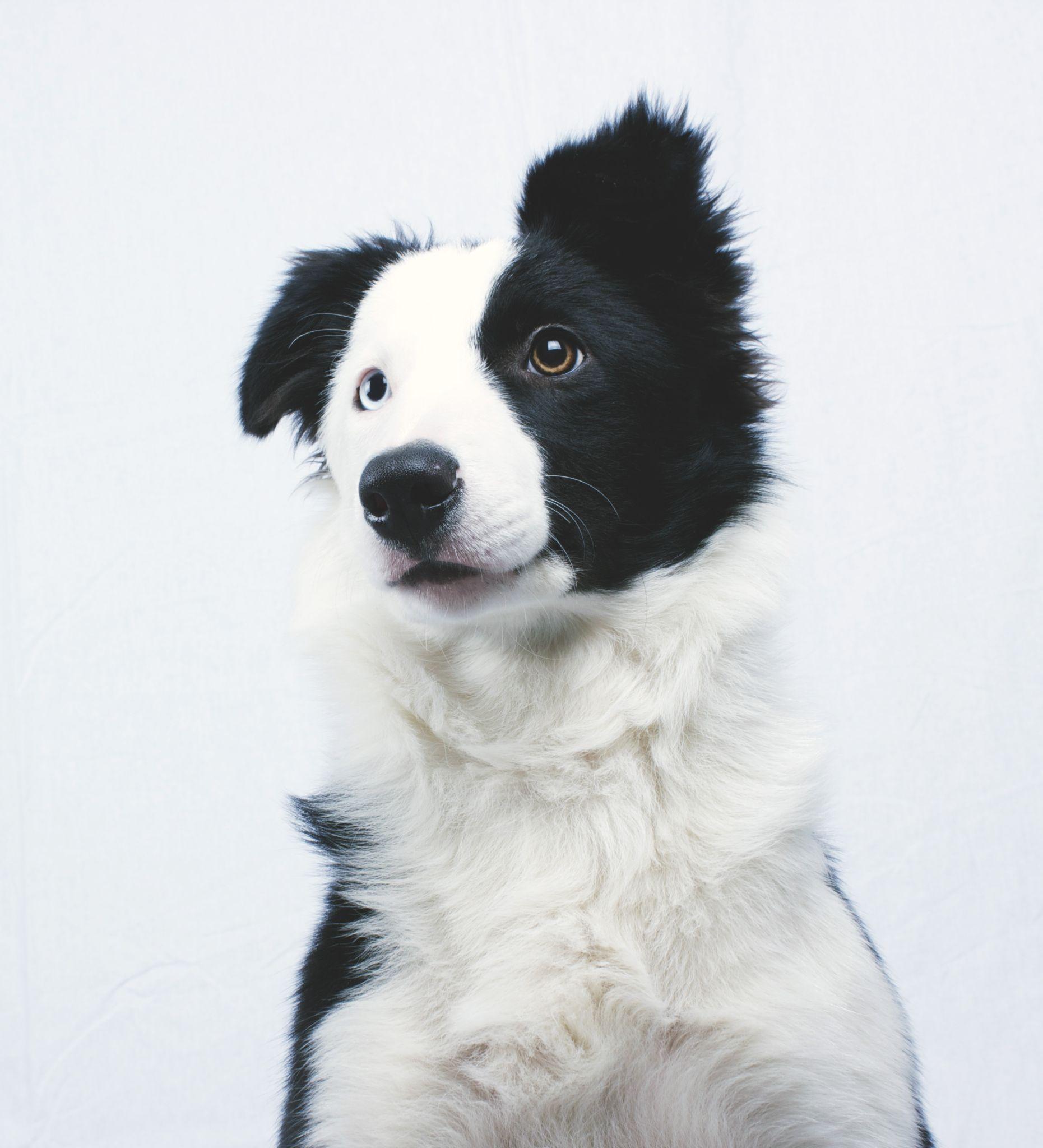 My Dogg <3 by Amer Polic