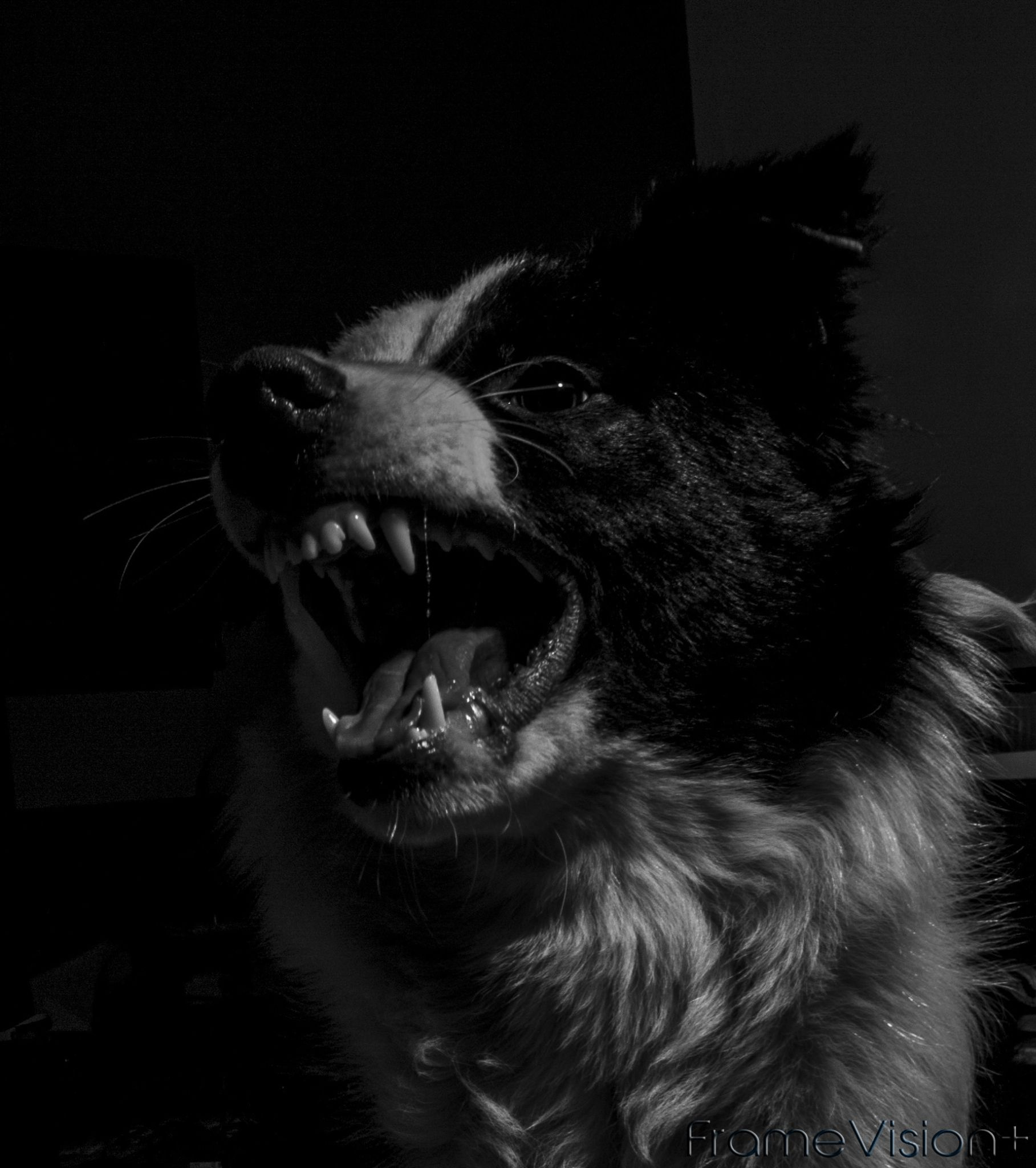 Angry Dog by Amer Polic