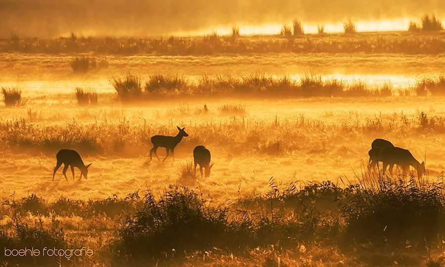 early ... one peaceful morning in september by robboehle