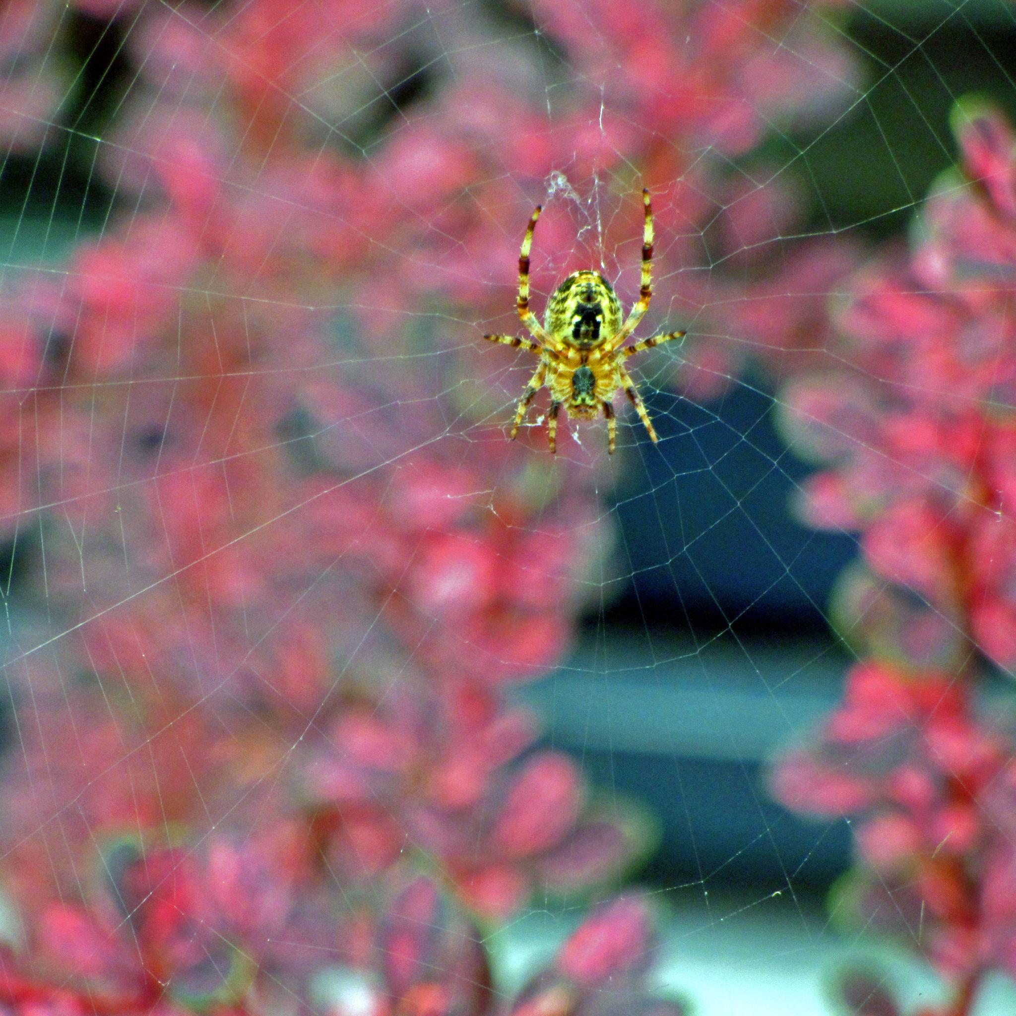 SPIDER WEB by asiya.khan.921